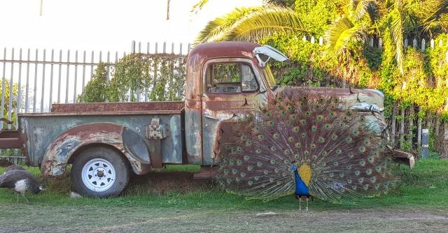haleypeacock